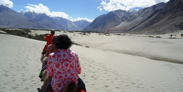 Two-Humped-Bactian-Camel-Safari-At-Hunder-Desert-Nubra-Valley