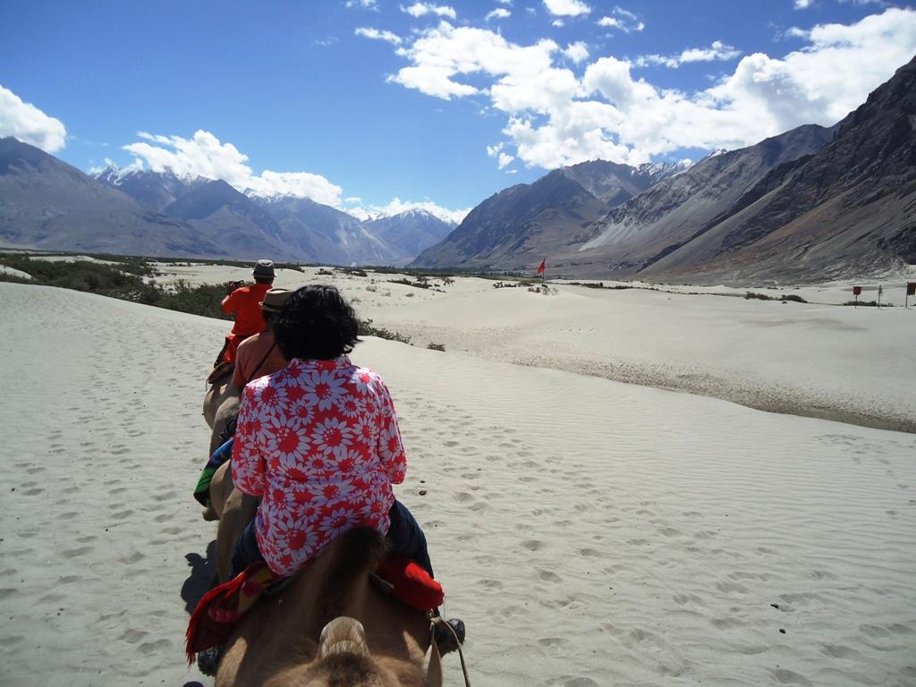 Two-Humped-Bactian-Camel-Safari-At-Hunder-Desert-Nubra-Valley